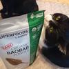 今日の黒猫モモ&黒白猫ナナの動画はお休みします!