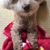 【シニア犬・老犬】シニア犬に必要な栄養素は?7歳にシニア用へご飯の切り替えする?
