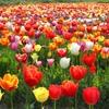 家族連れやカップルにおすすめ!季節ごとの花が楽しめるお出かけに最適な公園紹介!【奈良県】