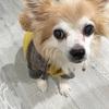 犬の腎臓病に負けない!秋・冬の寒さ対策。