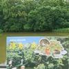 島がゆらゆら浮かんでる!?不思議体験【浮島の森】 和歌山県 新宮市