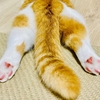 【猫学】しっぽの動きから猫の気持ちが分かる!猫のしっぽ辞典。