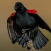Kaggle鳥コンペの上位者に学ぶ(鳥コンペ反省会資料を読む)