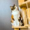【愛猫日記】毎日アンヌさん#155