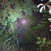 月夜のエギング。