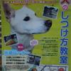 10月21日は、本門寺グラウンドで「犬のしつけ教室」!