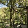 「徐福長寿館」の薬用植物園を散策しました♪ 4月21日