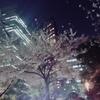夜桜とひとりぼっち