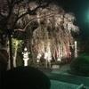 高尾の大光寺のしだれ桜美しいです。