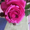 甘い香りのバラ