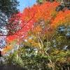 二本松林道から再度山へ紅葉めぐりハイク