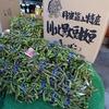 兵庫県)丹波篠山味まつりに黒大豆枝豆を買いに行く。2018年。