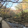 Mount Adatara, one of Japan's 100 famous mountains offer bustling autumn leaf scenery (1)