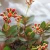 胡蝶蘭はきっと咲く