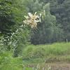 夏の野の花探し🌸 🔍