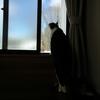 長い猫、伸びあがーる。