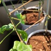 植物を育てるのは合法的なバクチ