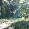 【散歩日記】明治神宮の森は猛暑を忘れる場所