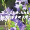 夏にも涼を感じられる、京都の桔梗(キキョウ)おすすめスポット6選