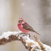 2019年2月9日の鳥撮り- お山(1/2)