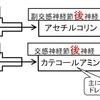 【医学部編入】生命科学講義・神経生理学⑤ ~興奮の伝達~