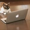 【完全図解】はてなブログで独自ドメインを設定する方法 3ステップ!