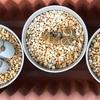 秋口からリト達の潅水量を増やす