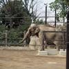 上野動物園に行ってきた!