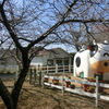 2021/02/21 成田ゆめ牧場