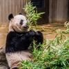 [動物園情報No.001]上野動物園