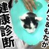 猫の健康診断