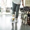 犬の鑑札の手続き方法 / かかる時間を解説