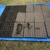 黒豆の苗作り2021