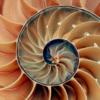 Ammonite ではじめるすくすく Scala 生活