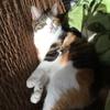 【愛猫日記】毎日アンヌさん#226