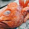 来ました。超高級魚「紅アコウ」!