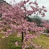 【静岡・清水区】河津桜、そしてプジョーが見えるサウナでととのう