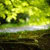 伏見桃山陵で遅咲きの枝垂れ桜や新緑を@2018