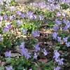 『桜丘すみれば自然庭園』の記事をスマホから初投稿❗