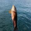 真鯛とヒラメを求めて🐟大阪府岬町