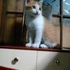 猫と田舎暮らし18