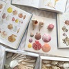湘南の中心で「貝殻」が「とにかく可愛い」とつぶやくの巻