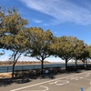 季節の彩湖ハーフマラソン初参戦