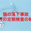 【猫の落下事故】3月の定期検査の報告について