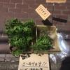 会社の敷地内の植え込みに苗を植えた