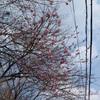 桜が咲き始めています・・・