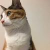 愛娘(猫)の誕生日と便乗ひなまつり