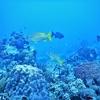 カンクン・コスメル島ダイビング【安心の日本人インストラクター】- メキシコ旅行記
