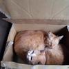 猫 猫 猫 かも・・
