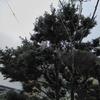 第57話:木登り合戦